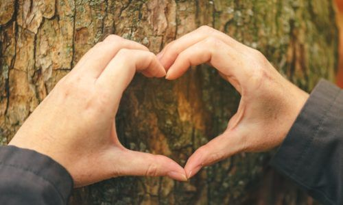 Female hands gesturing heart sign on tree trunk, ecology concept